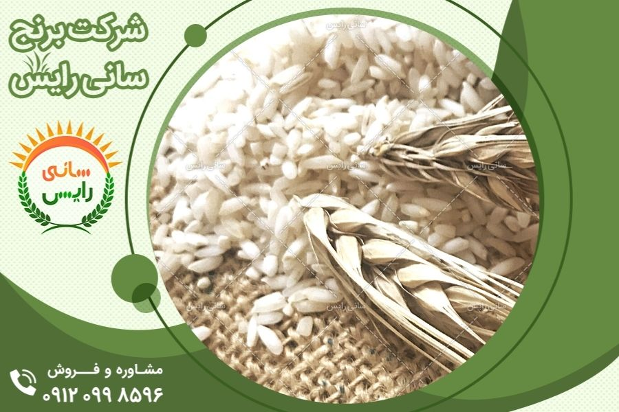 برنج چه ویژگی هایی دارد