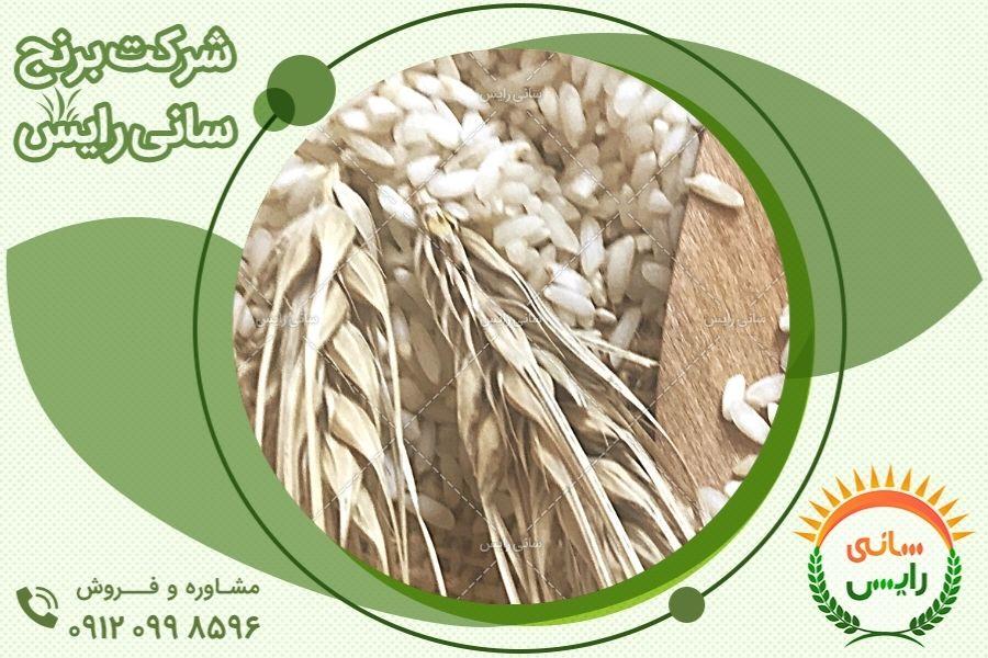 سفارش اینترنتی برنج عنبربو