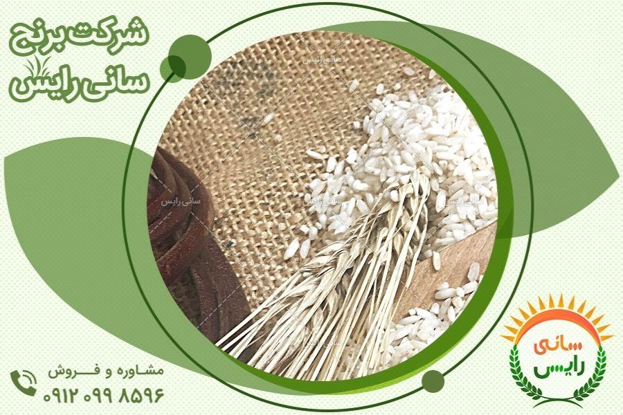 خرید حضوری برنج عنبربو