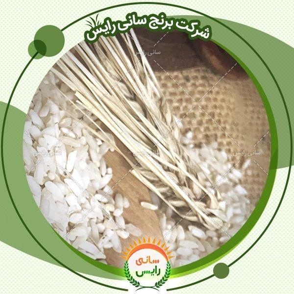 فروش مستقیم برنج عنبربو سارا
